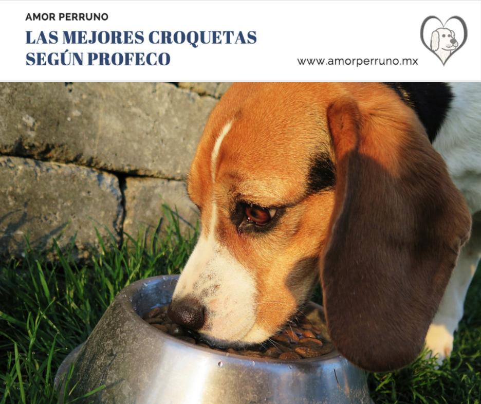 Para Las Mejores Resumen De Croquetas La En Perro México Evaluación UVSpzM