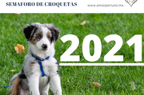 semaforo cachorros 2021 portada